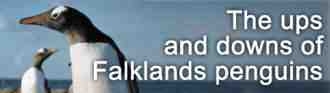Conservation Online - Falklands Penguins Feature