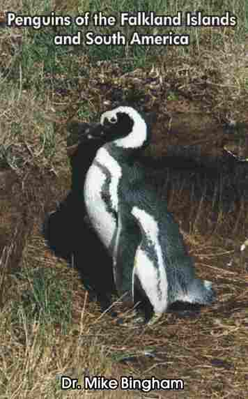 Purchase our book Penguins of the Falkland Islands and South America: Electronic version for instant download $3.95, Paperback $10.95. All proceeds go towards penguin research and protection